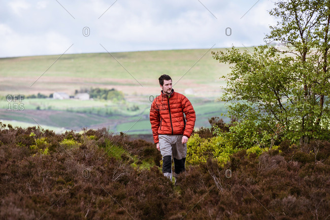 Young male hiker on heather moors, Pateley Bridge, Nidderdale, Yorkshire Dales