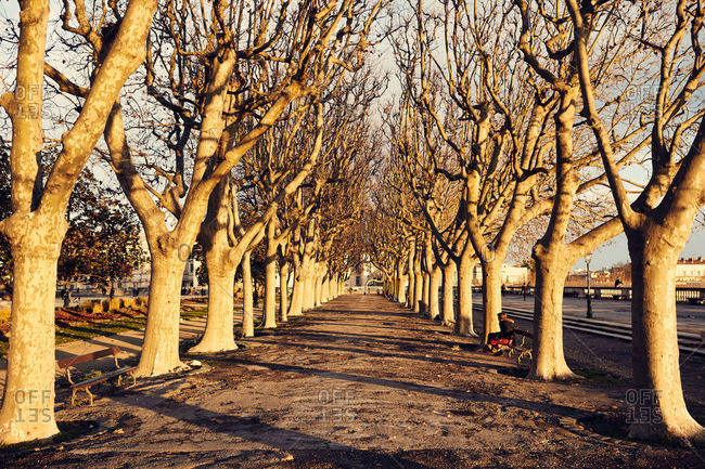 Tree lined boulevard in France
