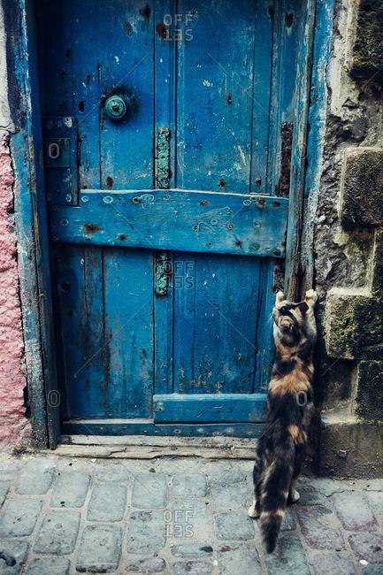 Cat scratching doorway in Morocco