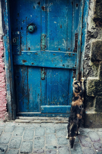 Cat scratching doorway in Morocco