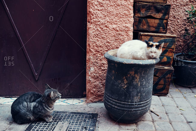 Cats resting in street, Marrakesh, Morocco