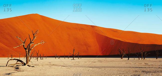 Dead trees in Namibian desert
