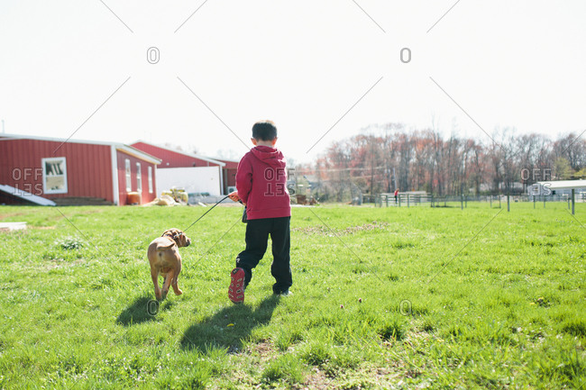Boy walking his dog on leash at farm