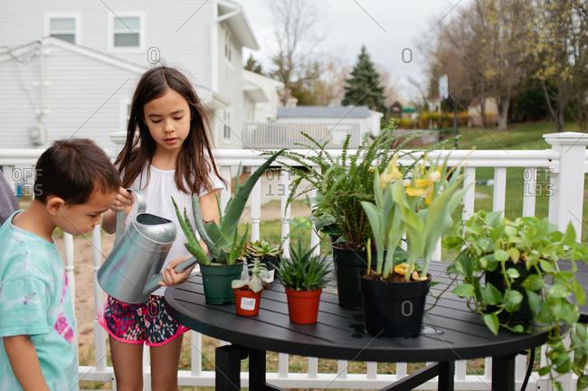 Siblings watering plants on deck table