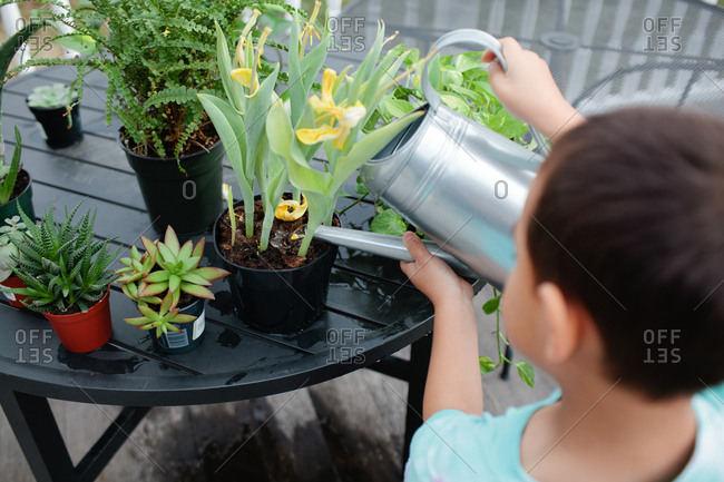 Boy watering plants with watering can