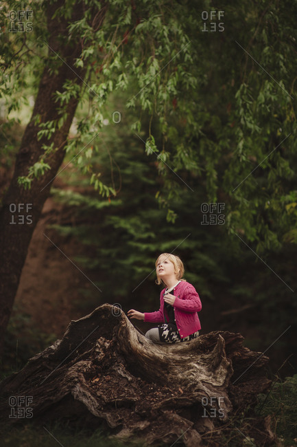 Young girl sitting on edge of gnarled tree stump in woods