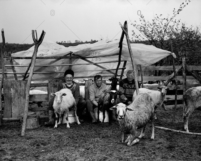 Romania - November 14, 2008: Farmers milk goats in the rural district of Maramures, Romania
