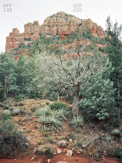 Gnarled tree and vegetation in a desert landscape