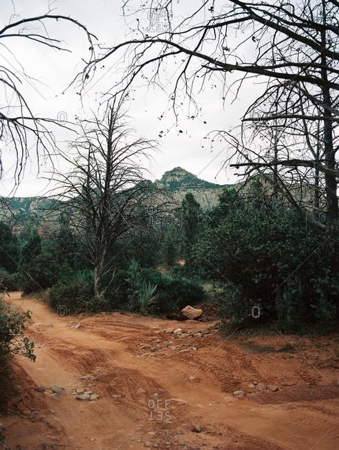 Rugged 4x4 road through the desert