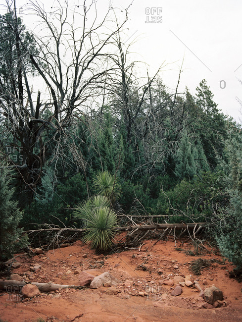 Fallen tree and vegetation along a dry streambed in desert