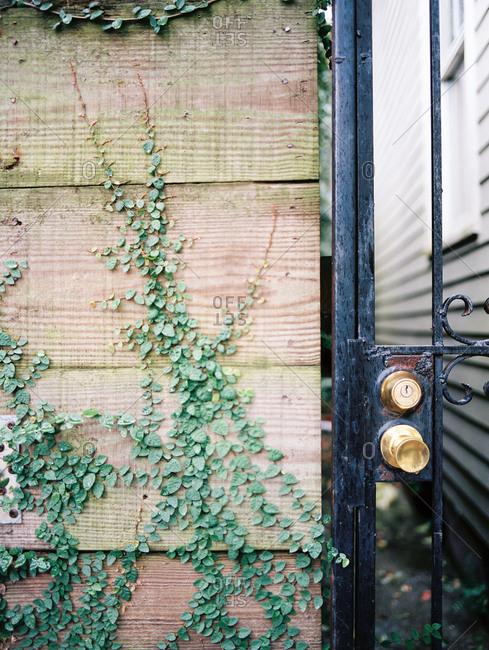 Doorway in gate with vines growing on wall