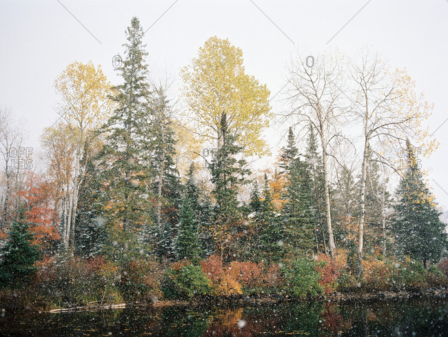 Snow falling on pond lined with autumn-hued trees
