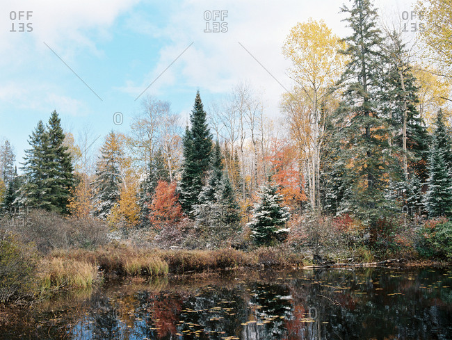 Autumn trees dusted with snow along a pond