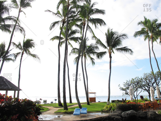 Grove of palm trees along a resort beach