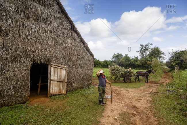 Pinar del Rio, Cuba - January 23, 2016: Man standing outside a tobacco farm at the Vi_ales Valley, Cuba