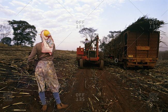 Farmers plowing a field
