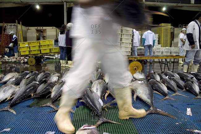 Brazil - April 25, 2008: Fish trade at the largest fishing warehouse in Latin America