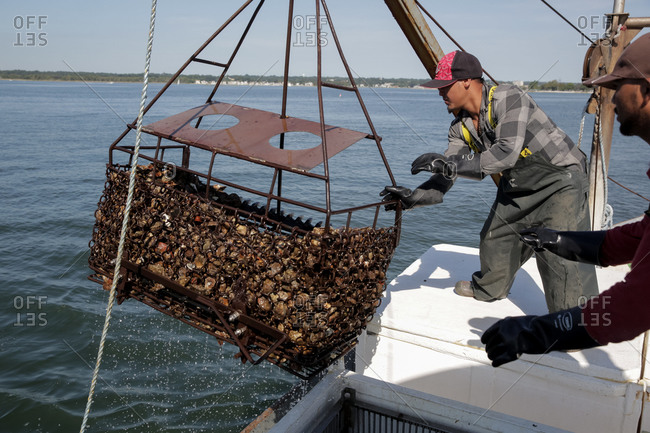 Norwalk, Connecticut, USA - August 29, 2015: Workers harvesting oysters with a dredge on the boat Grace near Norwalk, Connecticut