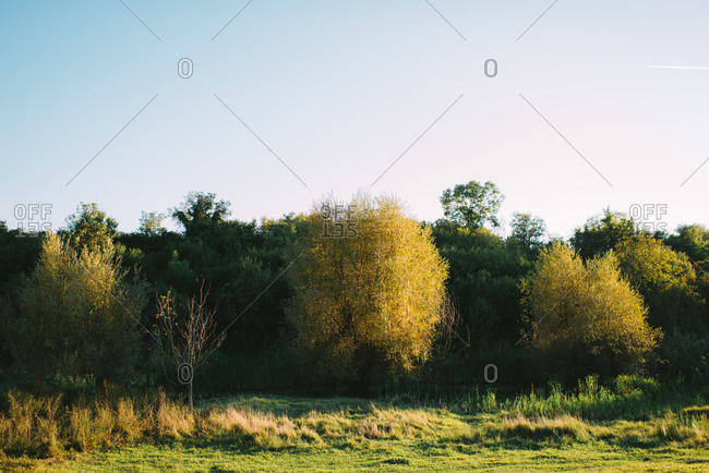 Yellow and green trees in the countryside
