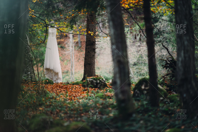 Wedding dress hanging from a tree branch in the forest
