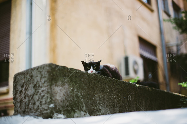 Black and white cat peering over cement ledge
