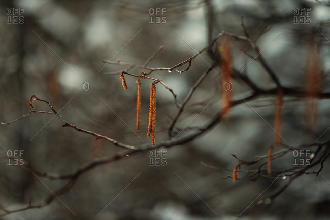 Close-up of tree branches in the winter