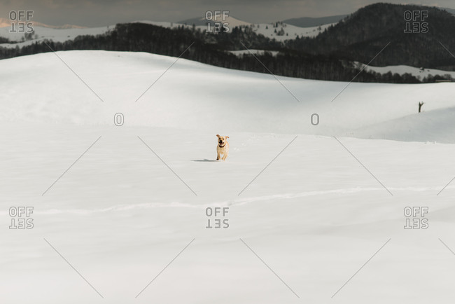 Dog running across a snow-covered hill