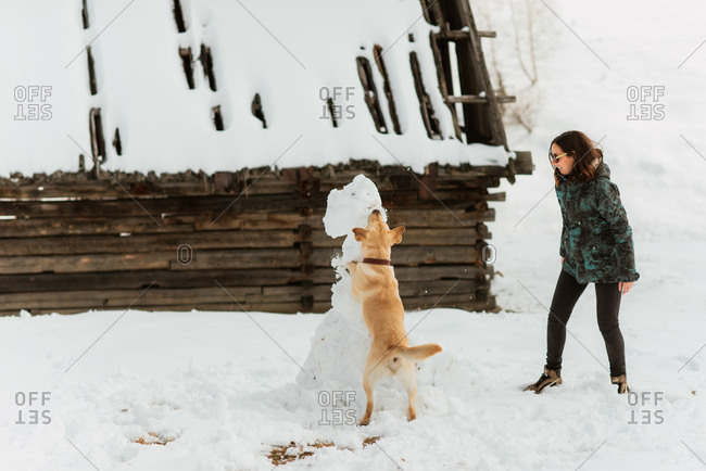 Young woman laughing as her dog bites a snowman