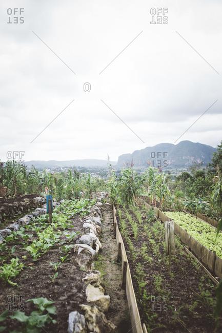 A garden in mountain valley