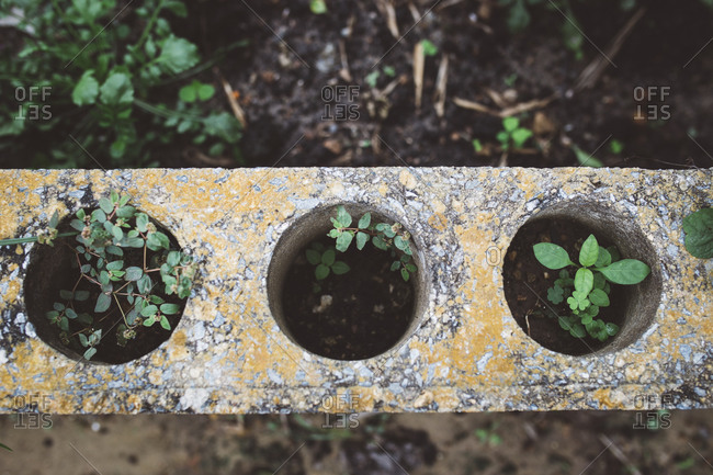 Plants growing in holes in stone