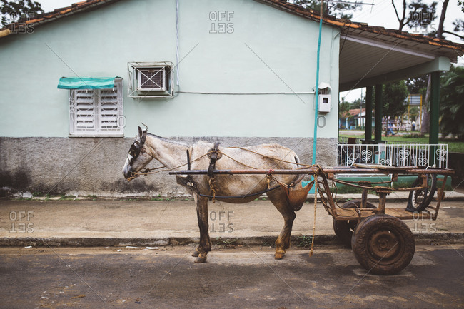 Horse pulling wagon in Cuban town