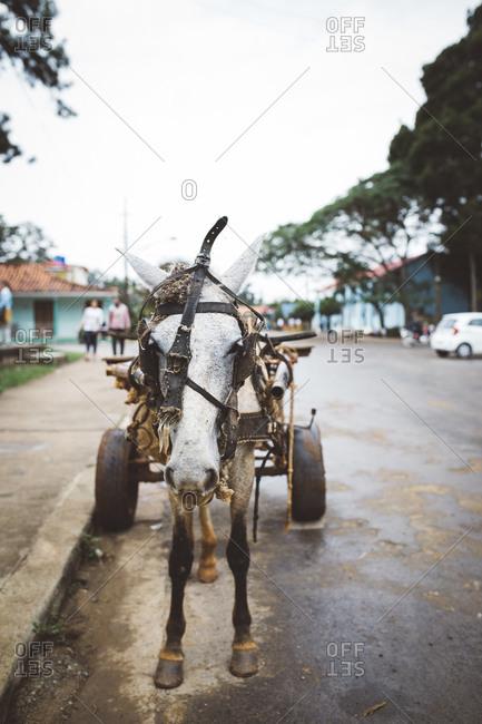 Horse pulling wagon in Cuban street