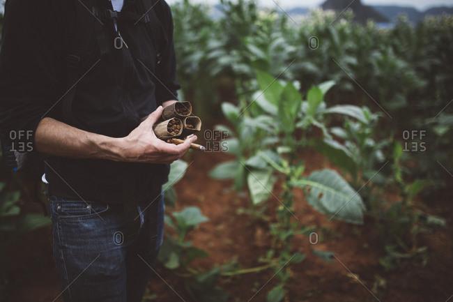 Man holding cigar in field