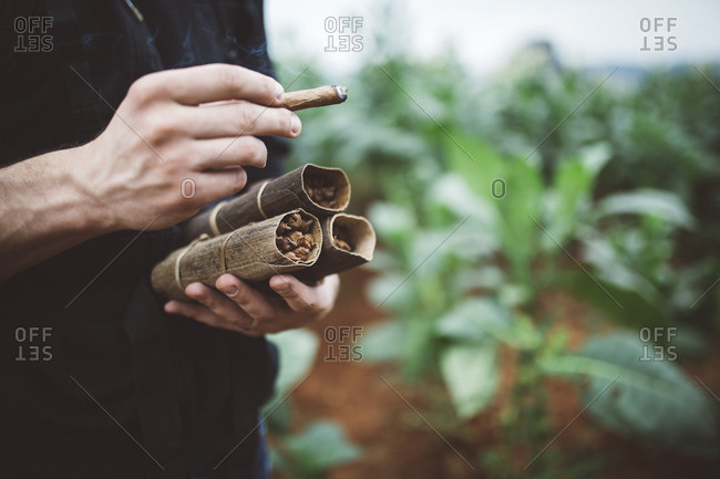 Man holding cigars in field