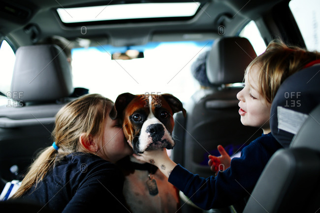 Boy and girl play with their dog in the backseat of their car during a family road trip