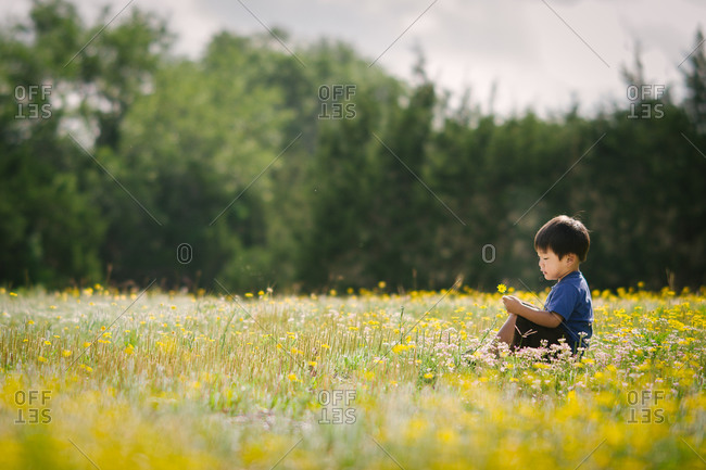 Young boy sitting in field of yellow daisies