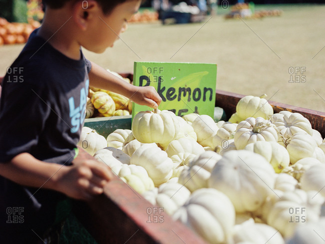 Boy selecting white miniature pumpkin from bin at farmers market
