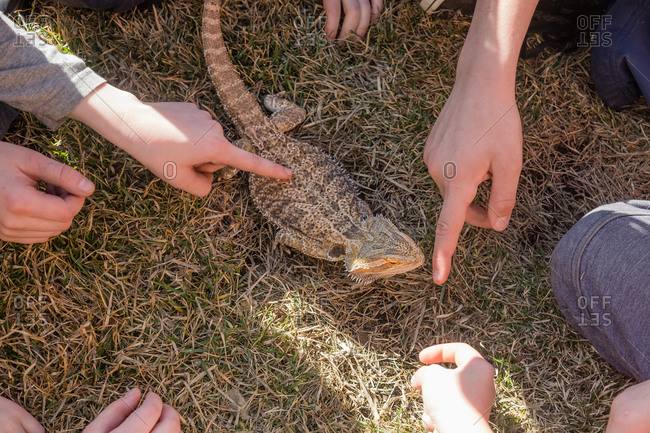 Kids around a lizard