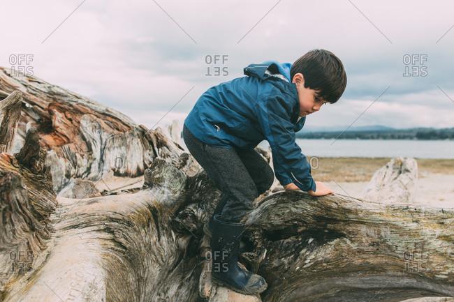 Boy climbing over tree on beach