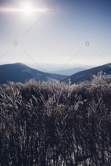 Sun shining over frozen trees and mountains