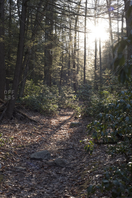 Sun shining on trail in a forest