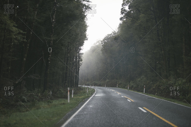 Road leading through foggy forest