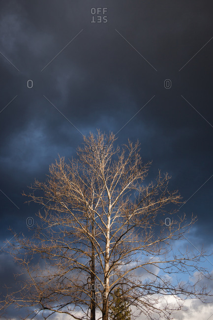 Low angle view of a tree under dark clouds