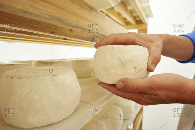 Hands holding goat cheese in storage room