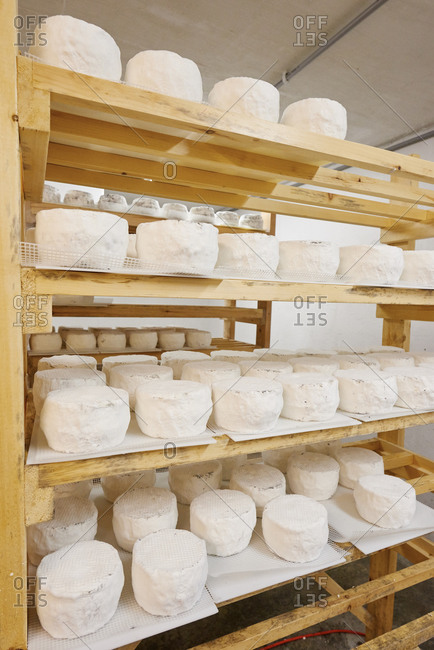 Goat cheese maturing on rack
