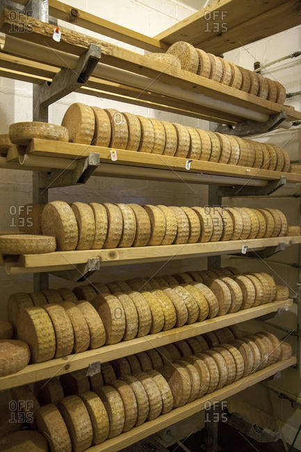 Wheels of cheese in aging room