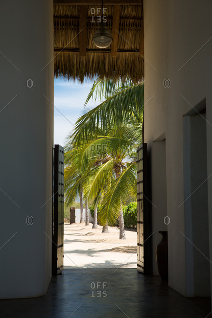 Row of palm trees line walkway from home to beach
