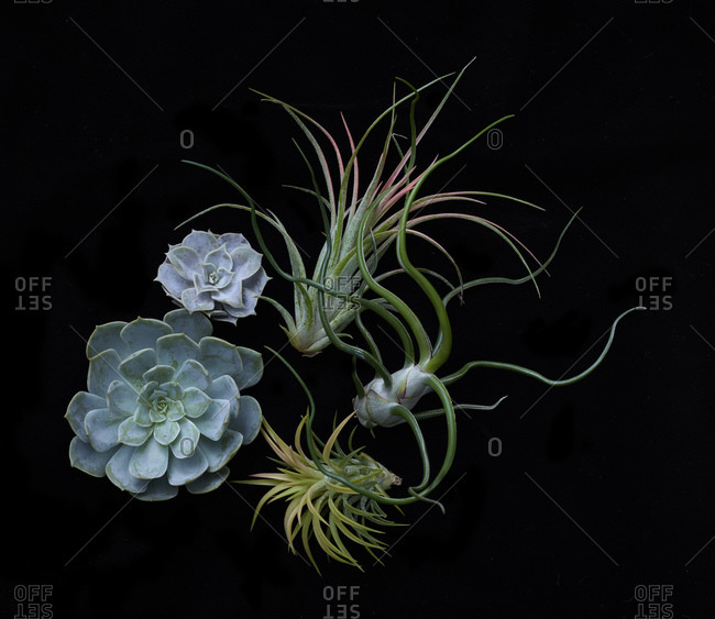 Studio shot of a variety of succulents and air plants