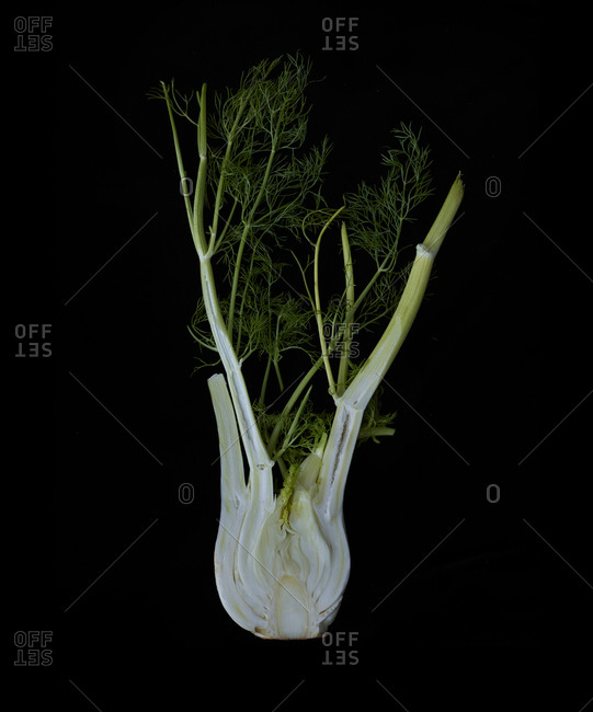 Close up of fennel