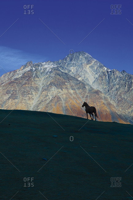 Silhouette of a horse standing along a ridge on Mount Kazbegi in Stepantsminda, Georgia